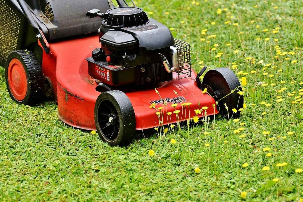 How to Cut Grass Properly